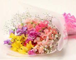 春の花の花言葉