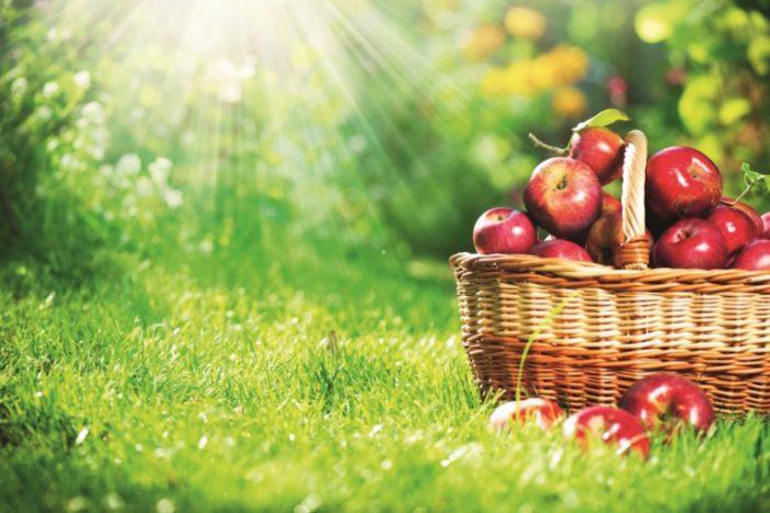 たくさんの赤いリンゴ