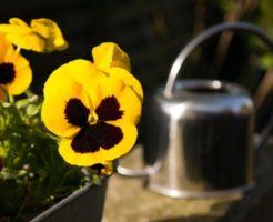 小さい庭でも家庭菜園やガーデニングが出来る