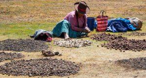 ペルーのジャガイモ